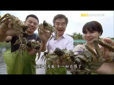 2019年大閘蟹特輯 巫老闆 東森 進擊的台灣 北海岸餐廳 北海岸海鮮婚宴會館