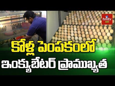 Egg Incubators Importance   Incubators Improve Poultry Production   Hmtv Agri