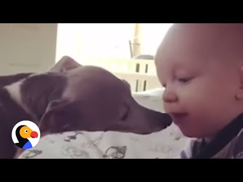 Baby Helps Shy Dog Gain Courage | The Dodo