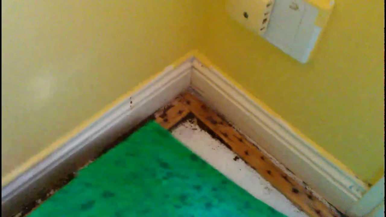 Termite Activity Under Carpet Youtube