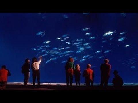 Oceans in Glass - Monterey Bay Aquarium