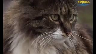 В Одессе проходит акция бесплатной стерилизации кошек