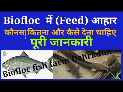 Repeat # Fish farming seed stock         by KGRM BIOFLOC FISH