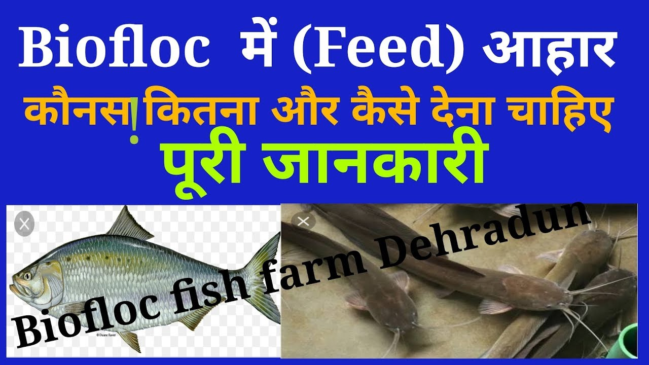 Which kind of Feed, How Much and How Feeding In Biofloc