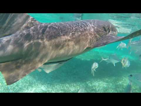 Belize - Caye Caulker - Snorkeling
