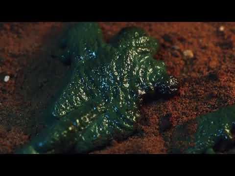 Martin Jensen - Wait (Offical Music Video)