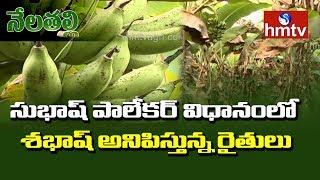 PG Student Natural Farming in Subhash Palekar System | Nela Talli | hmtv