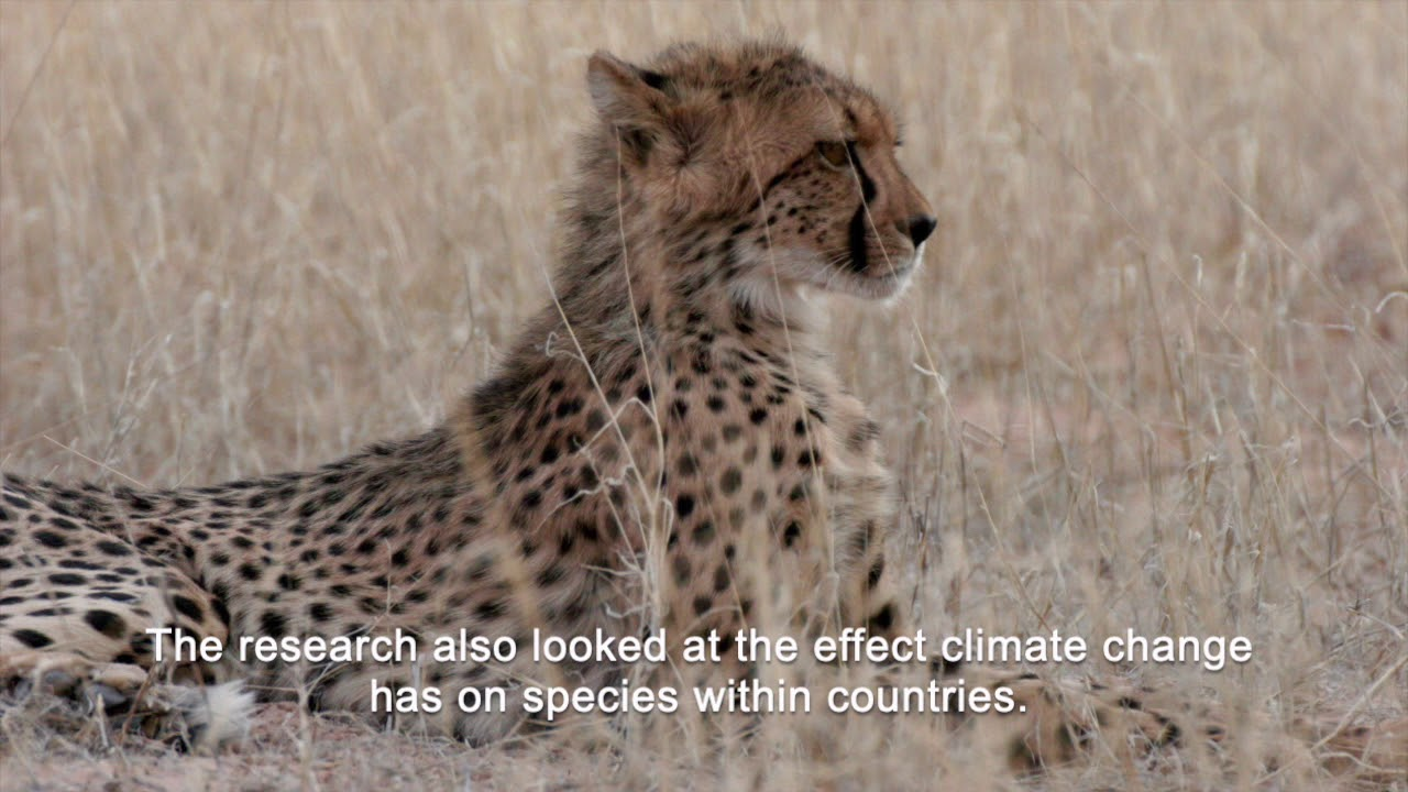 Man-made borders threaten wildlife as Climate Changes