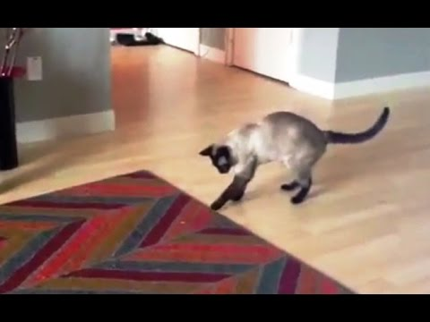 'Cats Scared of Moving Carpets Compilation' || CFS