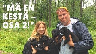 Söpistelyä koiranpentujen kanssa feat Soikku