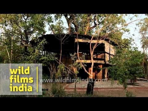 luxury tree house resort. Tree House Hideaway: Luxury Wildlife Resort In Bandhavgarh