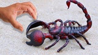 Lauf weg, wenn du einen Skorpion wie diesen siehst! Die furchtbarsten Skorpione der Welt