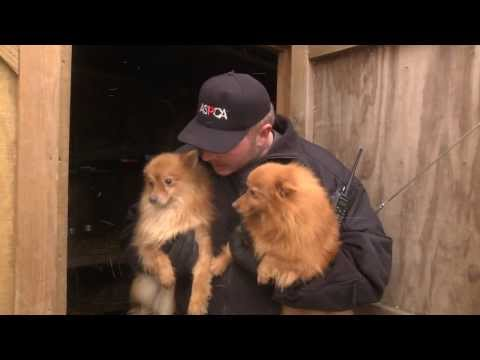 ASPCA And Kentucky Humane Society Rescue Puppy Mill Dogs In Nancy, KY Jan. 21, 2014