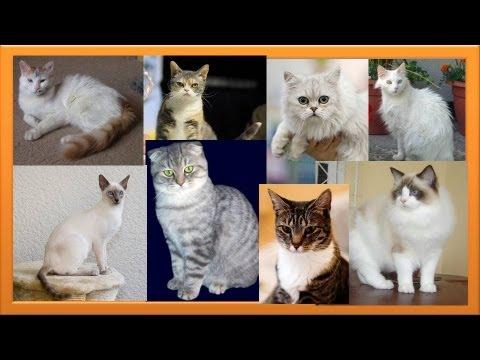 Cute kitten breeds part 1