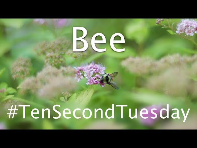 Bee 🐝: #TenSecondTuesday