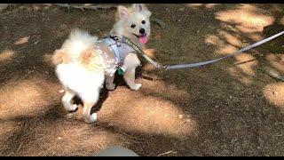 동래읍성에 놀러 간 강아지 A puppy who went to Dongraeeupseong Fortress in Busan.