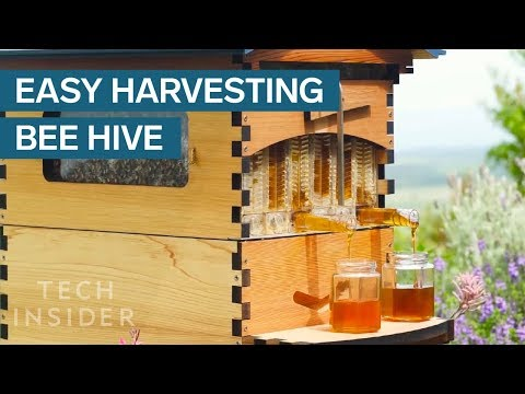 This Crowdfunded Beehive Provides Honey On Tap