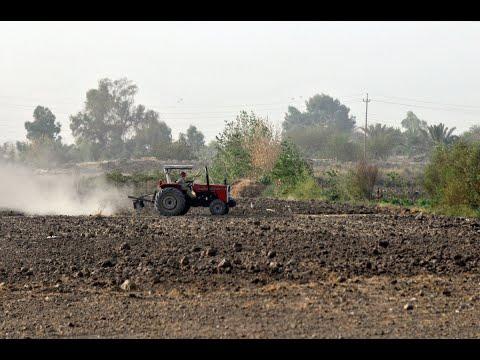 منظمة العفو الدولية: تخريب داعش لمزارع الأيزيديين جريمة حرب  - 10:55-2018 / 12 / 13