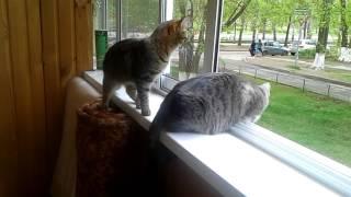 Кошки гуляют на балконе