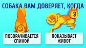 188300, гатчина, пушкинское шоссе, 15, трк «кубус», 1-й этаж. Железо, профессиональный инструмент, шины, диски акб, масла, автохимия,