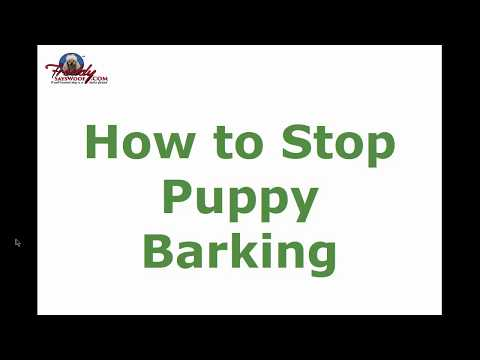 how-to-stop-puppy-barking-|-top-tips