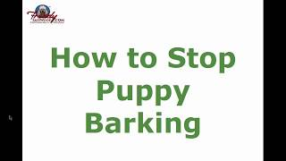 How to Stop Puppy Barking | Top Tips