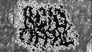 Acid Offal -14.Tracks