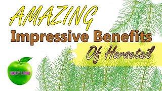 AMAZING  Impressive  Benefits  Of  Horsetail 🍏