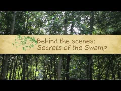 Behind the scenes: Secrets of the Swamp with Neil Humphreys