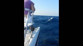 Catamaran Guru Aboard Catamaran Zuri - Followed by Dolphins