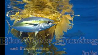 Blue Water Hunting and Freediving Kelp Paddys