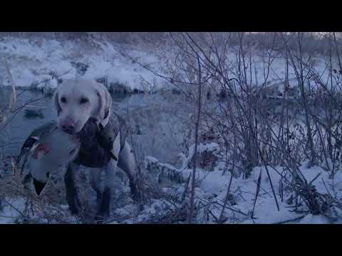 Duck Hunting Montana - Close & Personal - YouTube