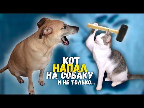 Приколы и фейлы с нашими домашними животными / SANI vlog