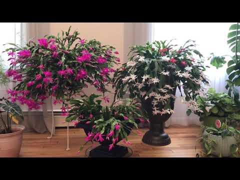 Мои комнатные растения 🌱 легкого ухода 🤷♀️