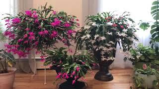 видео Комнатные растения | Цветочные мотивы... - Part 2
