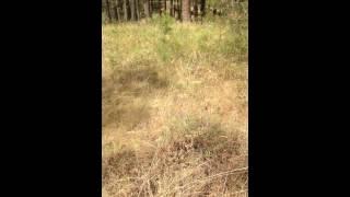 turnbull wildlife refuge with dib