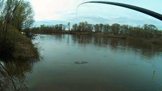 Ловлю карася на поплавочную удочку - MF №60 / Crucian fishing