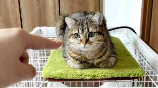 ヒーターの上で香箱座りしている猫に指を入れると…。