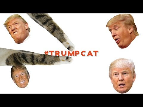 Trump SHUTS DOWN 'Kittens Scratch Trump' SITE | What's Trending Now!