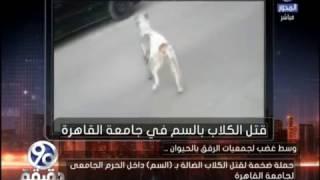 بالفيديو.. كلب يصارع الموت بعد تسميمه بجامعة القاهرة