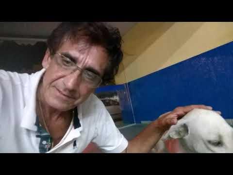 RECUERDOS: Cachorrinho na Rodoviária de Paulo Afonso - (BA).