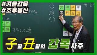 [중급] 33강 - 子•丑월의 갑목 실전사주💚 [갑목론 마지막]