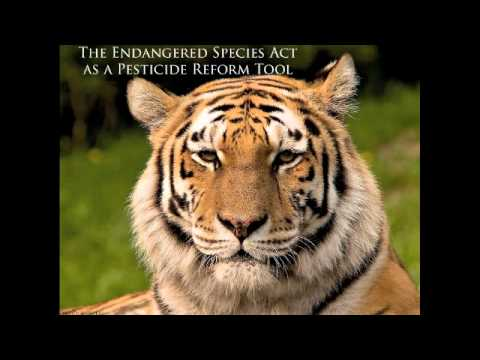 The Endangered Species Act as a Pesticide Reform Tool.m4v
