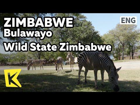 【K】Zimbabwe Travel-Bulawayo[짐바브웨 여행-불라와요]야생의 나라 짐바브웨/Wild/Animal