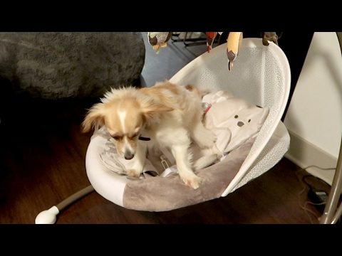 BUDDY IN BABY CHAIR!