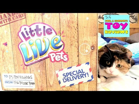 Little Live Pets Surprise Present Cuddles My Dream Kitten Toy Review Opening | PSToyReviews