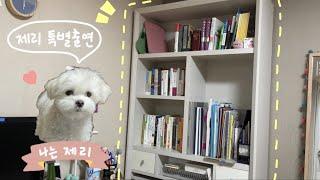 Vlog#12 D.I.Y 가구 리폼하기 ✌️| 페인트칠…