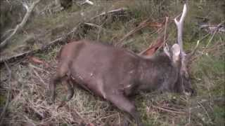 Solo Sambar Hunting Trip,  May 2015 Hd