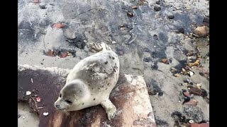 Seal pup stranded on N.J. beach helped back to the ocean