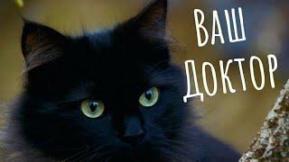 Доктор Кот. Как лечат кошки. Какие породы кошек лечат. Что лечат кошки. Анималотерапия